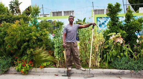 Aux États-Unis, un gangster-jardinier plante illégalement des légumes bio pour manger local   ECOLOGIE_DEVELOPPEMENT DURABLE   Scoop.it