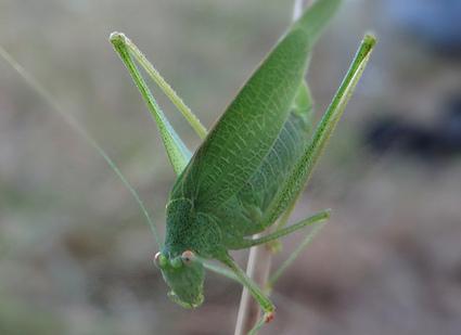 Buzz: Il trouve une sauterelle dans le sachet de salade !! (video) | cotentin webradio Buzz,peoples,news ! | Scoop.it
