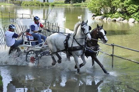 Pau : capitale mondiale de l'équitation pendant 2 semaines ! , Conseil général des Pyrénées Atlantiques | Couleurs d'Automne | Scoop.it