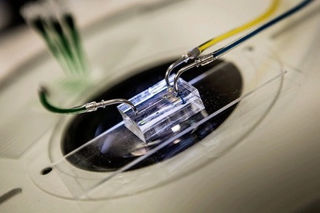 Lab-on-a-Chip Simulates Heartbeat for Testing New Drug Therapies (VIDEO) | Shaping the Future of Medical Technology | Scoop.it