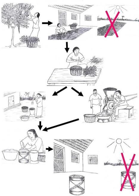 MORINGA LEAVES POWDER nutrition | Buy Moringa leaf powder | Moringa Tree | Scoop.it