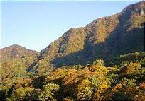 Japanese Nature | Year 3 Science: Living things in Japan | Scoop.it