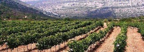 Israël veut produire de grands vins | Le vin quotidien | Scoop.it