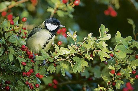 Comment inviter la biodiversité en ville ? | Nature en Ville | Scoop.it