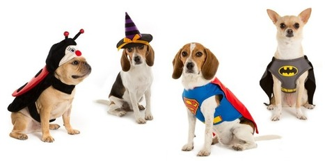 6 Amazing Halloween Costumes You Must Purchase for Your Pet | Hot and Latest Deals and Coupons | Scoop.it