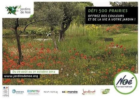 500 prairies pour la biodiversité | Actualités Nova-Flore | Scoop.it