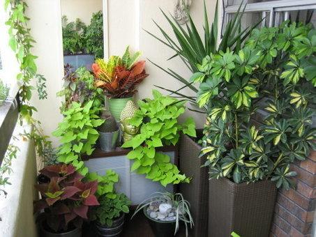 Balcony Garden Ideas | Balcony Gardening | Scoop.it