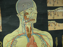 Resources for Biology - Human Anatomy & Physiology | Plan for my future | Scoop.it