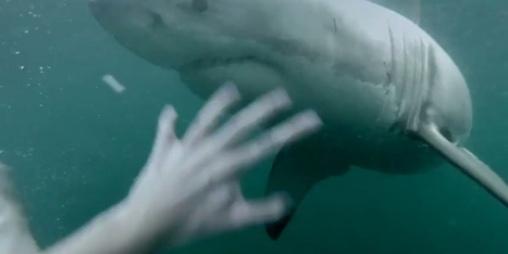Watch a terrified man escape a great white | Shark conservation | Scoop.it