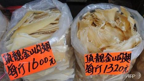 New restrictions bite Hong Kong shark fin traders - Channel NewsAsia | All about water, the oceans, environmental issues | Scoop.it