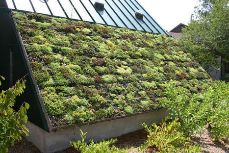 France's Eco-Roof Law – Too Green to be True? | Greenroofs & Urban biodiversity | Scoop.it