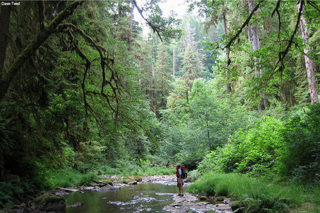 A Rare Opportunity to Save Old-Growth Treasures | Bio { Cultural } Diversity | Scoop.it