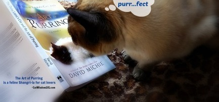 Cat Wisdom 101 | The Art of Purring Author Q & A and Book Giveaway | Cats | Scoop.it