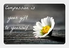 COMPASSION  IS ENRICHING  | Wellness Blog on Speakingtree.in | Empathy and Animals | Scoop.it