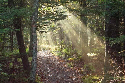 Canada's Boreal Forest: Why Does it Need Protection? | Sustainable Futures | Scoop.it