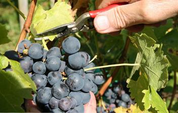 Vente de vins de Chinon rouges et rosés à l'exploitation viticole le Coteau de Villegron à la Roche-Clermault (37) | Mary Cyril | DOMAINES ET CHATEAUX AOC CHINON | Scoop.it
