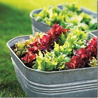 Container Garden Planning | The Clean Project | Gardening ideas | Scoop.it