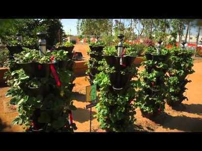 Gardeniere Teena Discusses Vertical Gardening – The Home Depot | | Wellington Aquaponics | Scoop.it