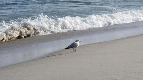 1 in 10 U.S. beaches fails bacteria test in survey | Environment and Wildlife | Scoop.it