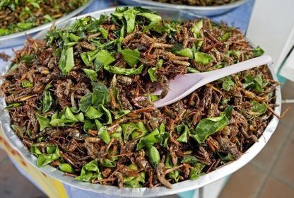 Large-scale edible insect farming needed to ensure future global food supply | Mixed Farming, Sustainable Agriculture, Food Security | Scoop.it
