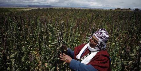 GEOGRAPHIE - La ruée vers le quinoa, la graine d'or bolivienne (LeMonde) | La Longue-vue | Scoop.it