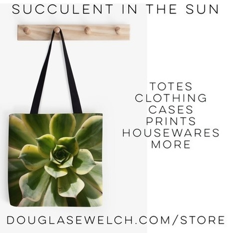 My Word with Douglas E. Welch » Gift these Succulent in the Sun Totes and much more. | Douglasewelch | Scoop.it