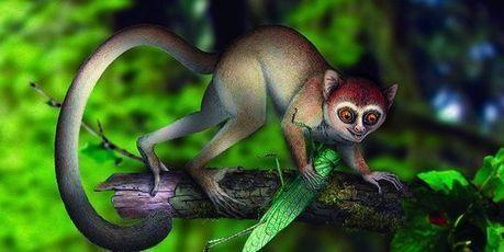 Le plus ancien primate connu découvert en Chine | SandyPims | Scoop.it