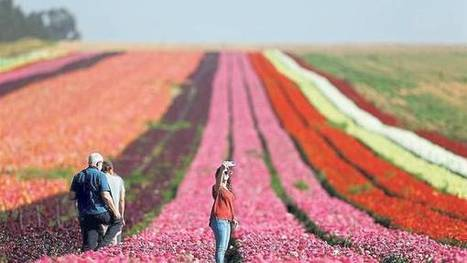 El agro israelí es uno de los más tecnificados del mundo | #IsraelTech | Scoop.it