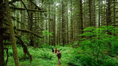 Study: Hiking Makes You Happier | Naturalist Education | Scoop.it