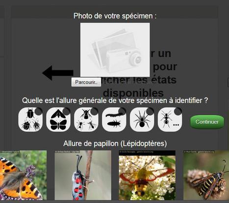 20 minutes pour découvrir les insectes ! | Clic France | Scoop.it