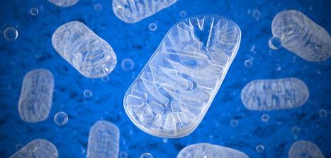 Comment nos cellules ont-elles appris à respirer? | Biologie 2.0 | Scoop.it
