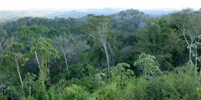 Reducing Tropical Forest Destruction Could Cut CO2 Emissions by One-Fifth | Rainforest EXPLORER:  News & Notes | Scoop.it