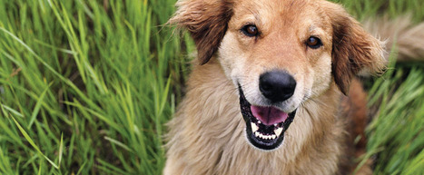 Vet Hospital Mississauga Is a Term with Many Connotations for your Beloved Pet | Vet Hospital Mississauga | Scoop.it