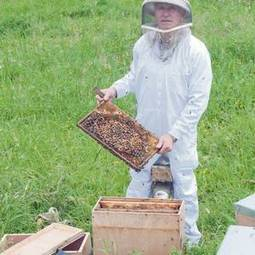 Beekeepers facing 'meltdown' as more than half of hives wiped out - Independent.ie | A Sense of the Ridiculous | Scoop.it