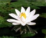 Le Yoga, une voie vers la sagesse   Santé, bien-être, environnement   Scoop.it