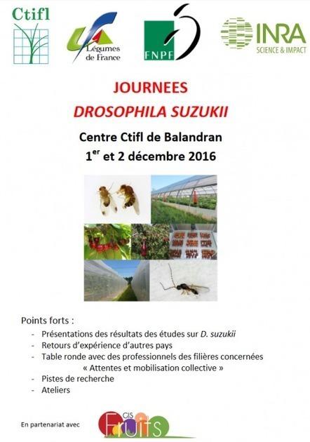 01-02/12/16 - Journées Drosophila suzukii - Centre CTIFL de Balandran (Gard) | INRA Montpellier | Scoop.it