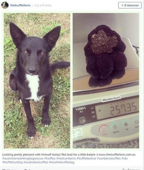 Il sauve des chiens de refuge et leur apprend à chercher des truffes! | La truffe dans tous ses états | Scoop.it