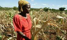 UN warns of looming worldwide food crisis in 2013   Earth Citizens Perspective   Scoop.it