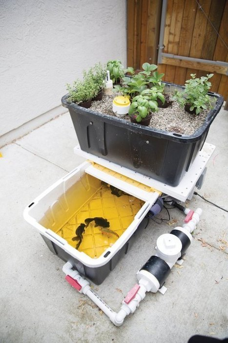 New Project: Build an Aquaponic Garden with Arduino | Arduino, Netduino, Rasperry Pi! | Scoop.it
