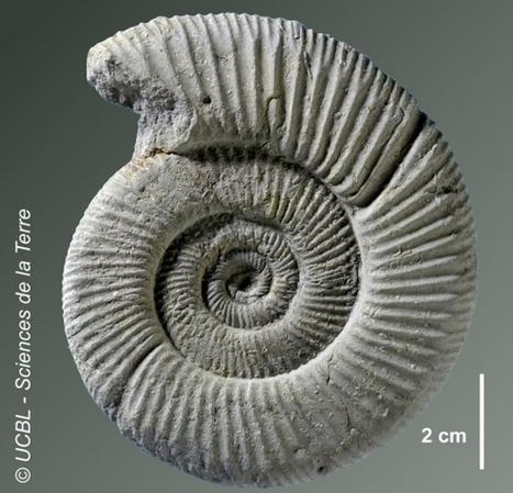 Trésors cachés des universités. Dix millions de fossiles à Lyon 1 - Educpros | Sciences Pour Tous | Scoop.it