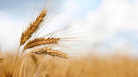 Expanding organics market gains momentum among U.S. producer... | sustainablity | Scoop.it
