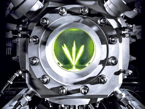 Audi Says Synthetic 'E-Fuel' From Microorganisms Is Better Than Gas Or Diesel | Radio Show Contents | Scoop.it