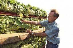 Tobacco farming makes comeback in Canada | Smoking Around The World | Scoop.it