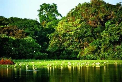 Amazonas, ejemplo de preservación. Ecoturismo en una de las maravillas del mundo | LAS MARAVILLAS DEL MUNDO | Scoop.it