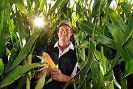 Corn, the new golden crop; Boort, Victoria. | GTAV AC:G Y9 - Biomes and food security | Scoop.it