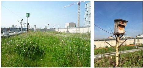 Potagers urbains et toitures végétalisées : rencontre avec Topager, entreprise du paysage urbain comestible et sauvage | Toitures végétales & Biodiversité urbaine | Scoop.it