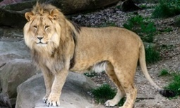 New York woman killed by lion in South Africa 'lived a life of adventure' | Mes passions natures | Scoop.it