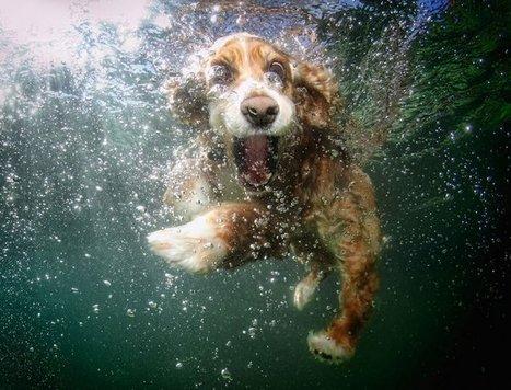 Al agua perros para terapias en piscinas | Personas y Animales | Scoop.it