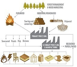 Industry key to conserving forests as demand for wood projected to triple by 2050 | Nature + Economics | Scoop.it