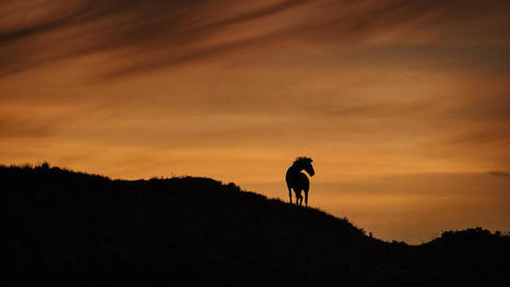 Photographer captures Theodore Roosevelt park's majestic wild horses - Grand Forks Herald | Home & Horse | Scoop.it